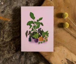 Kaart - Plantfamily